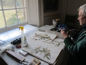 Here's Simon inspecting some of the herbarium collection